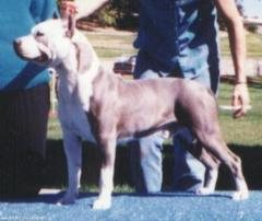 CH York's Nevada Blue Diamond (Rocko's 5th gen.)