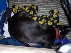 April 24th, 09'- Onyx in her whelping box.