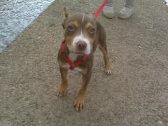 SBK's new addition Jade-What a pretty little girl!