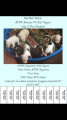 APBR Colby and blue razor blood puppies
