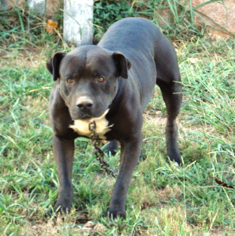 Tyson one of our rescues
