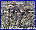 A Town Blue Royal Kennels