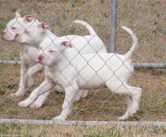 Winter at Raging Storm Kennels