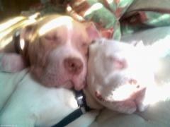 Kelso and Winter Sleeping