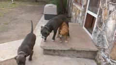 tha three kids on tha back porch