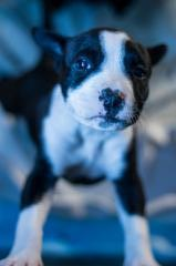 Pup 1 Female 3