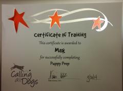 Max Graduated Puppy Prep.