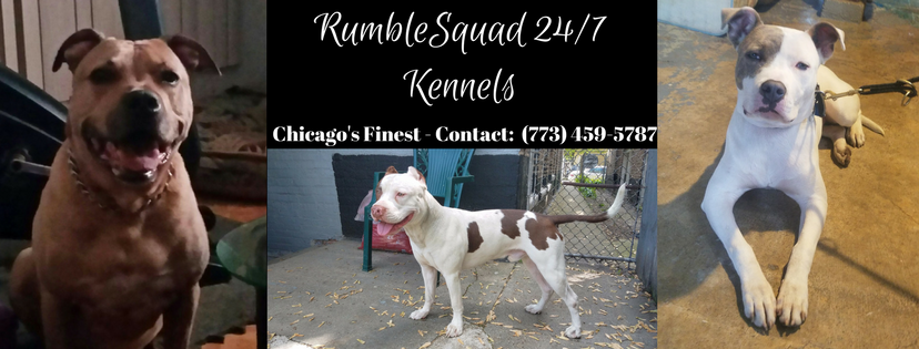 RumbleSquad 24-7 Banner