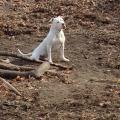 RockCrusher Bulldogs