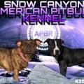 Snow Canyon Pitbulls